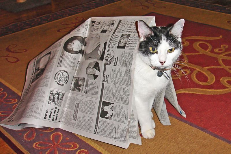 Picture of a cat under a newspaper